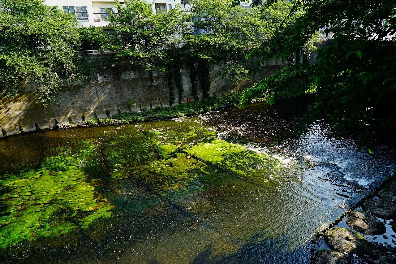 高田橋から眺める神田川もいいよね