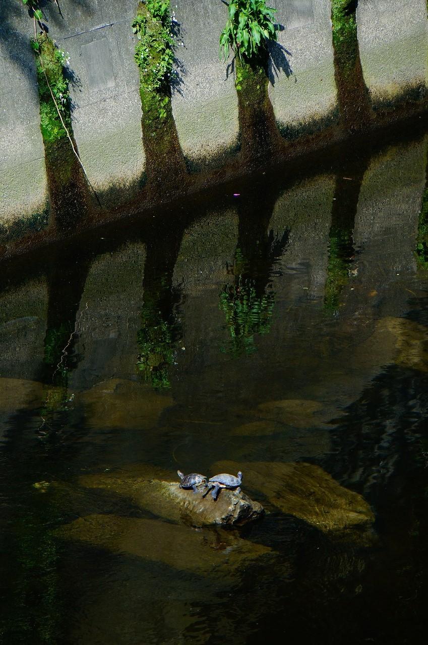 亀さんがひなたぼっこ