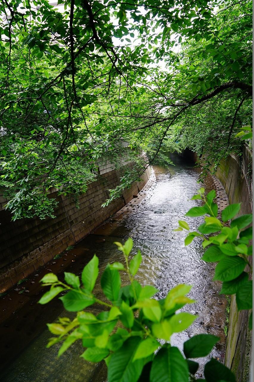 ここは小滝橋近くの神田川だよ