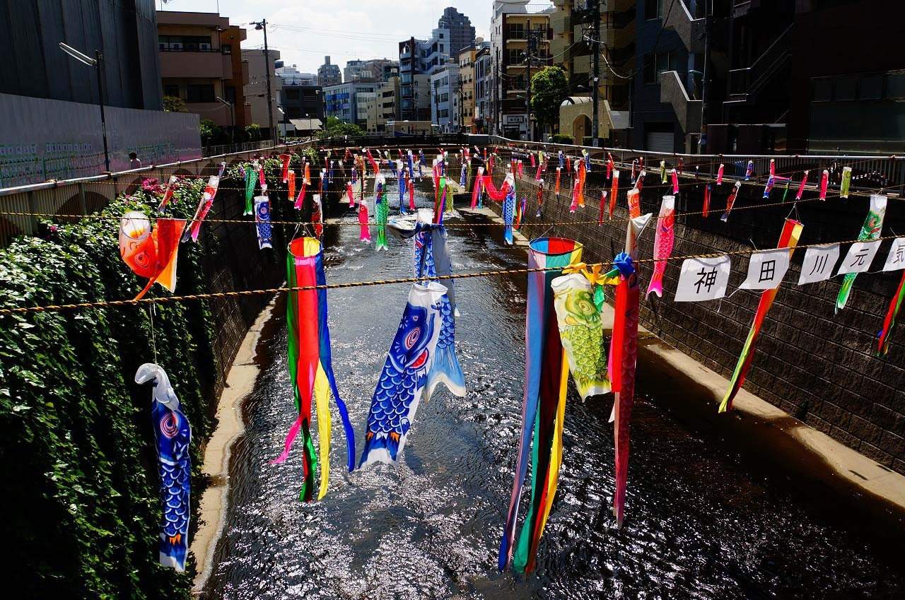 気持ちよさそうに神田川を泳いでる鯉たち