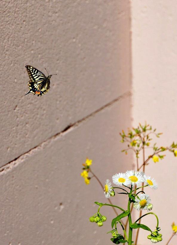 わ!蝶々さんだ。思わずシャッターを押したら偶然撮れんだ。へへへオマケだよ