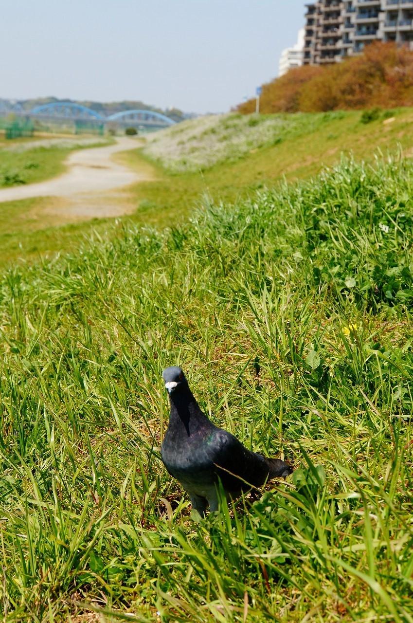 写真を撮っていたら鳩さんもやってきた( ・_・;)