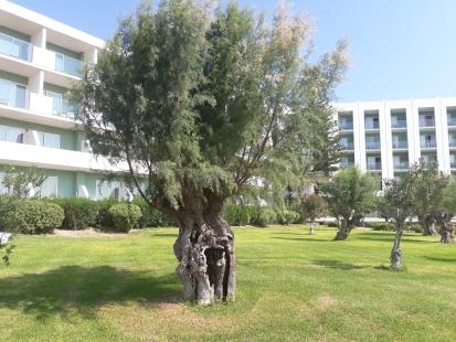 Urlaub: Hotels auf Rhodos, glutenfrei