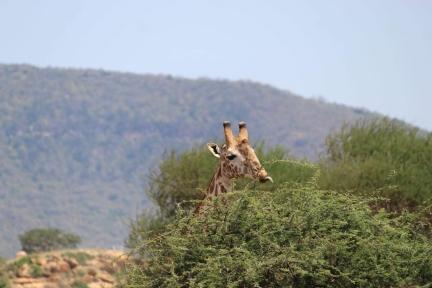 Urlaub: Kenia-Reiseinfos