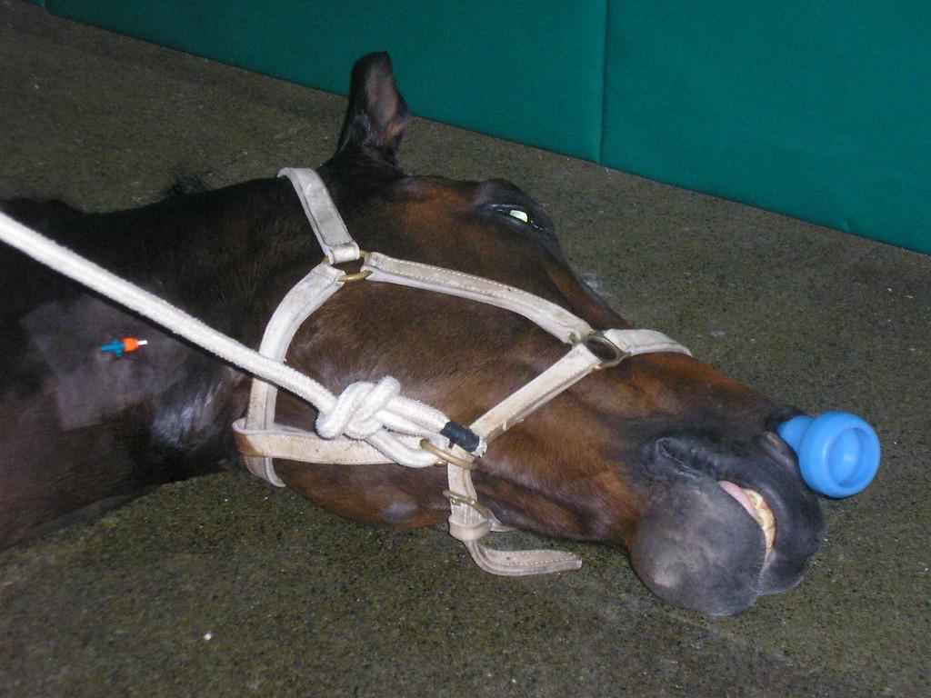 Recuperacion anestesica en box induccion