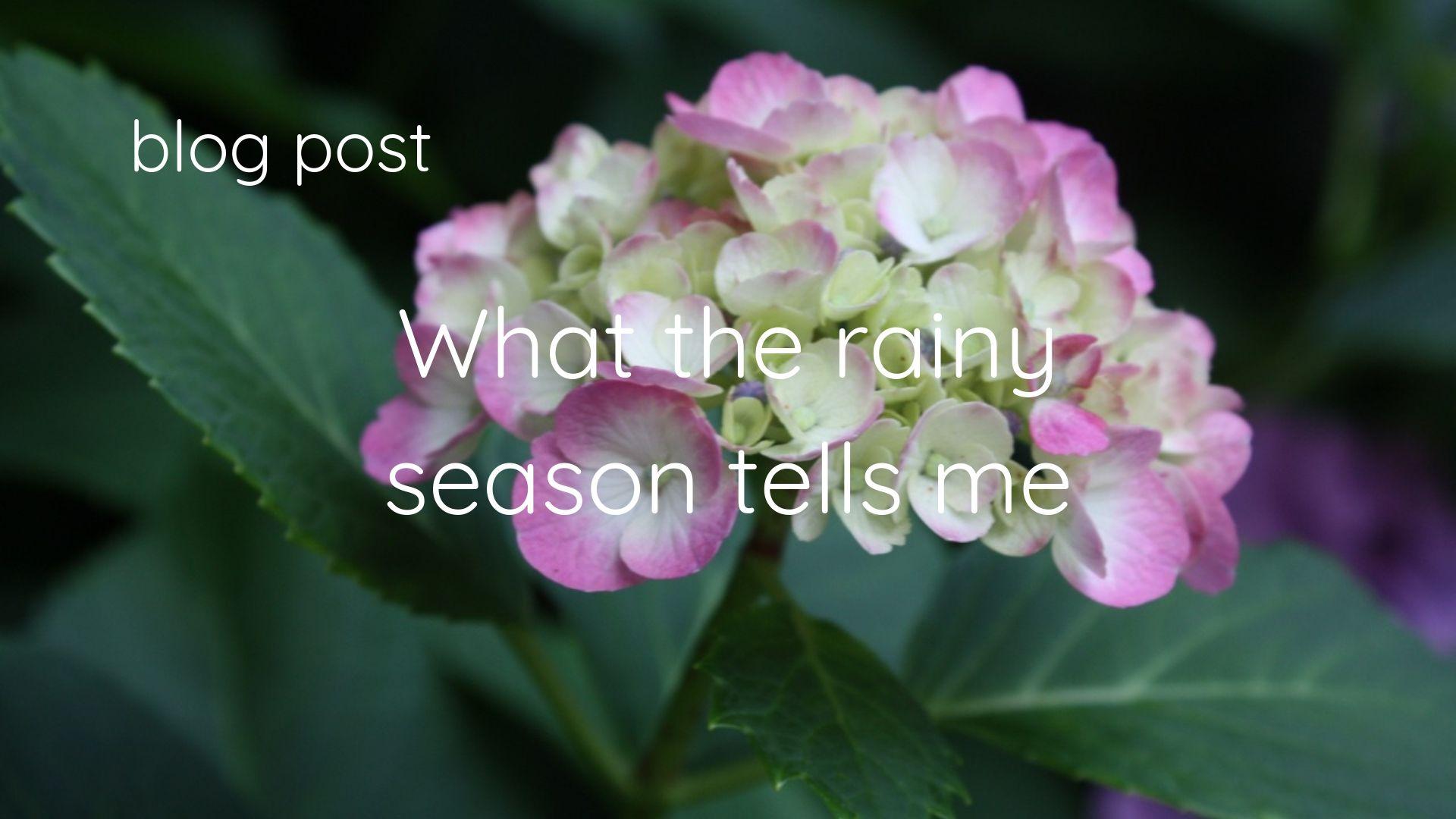 What the rainy season tells me