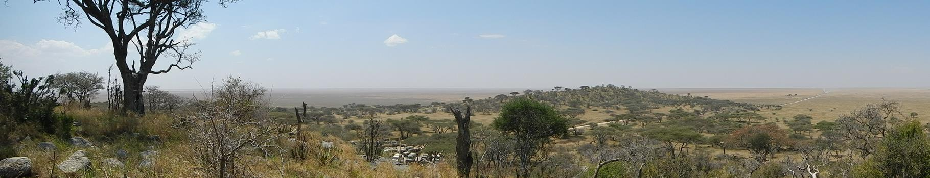 Blick in die Weite der Serengeti / View into the expanse of the serengeti
