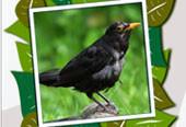 Lerne die Stimmen der 40 häufigsten Gartenvögel kennen