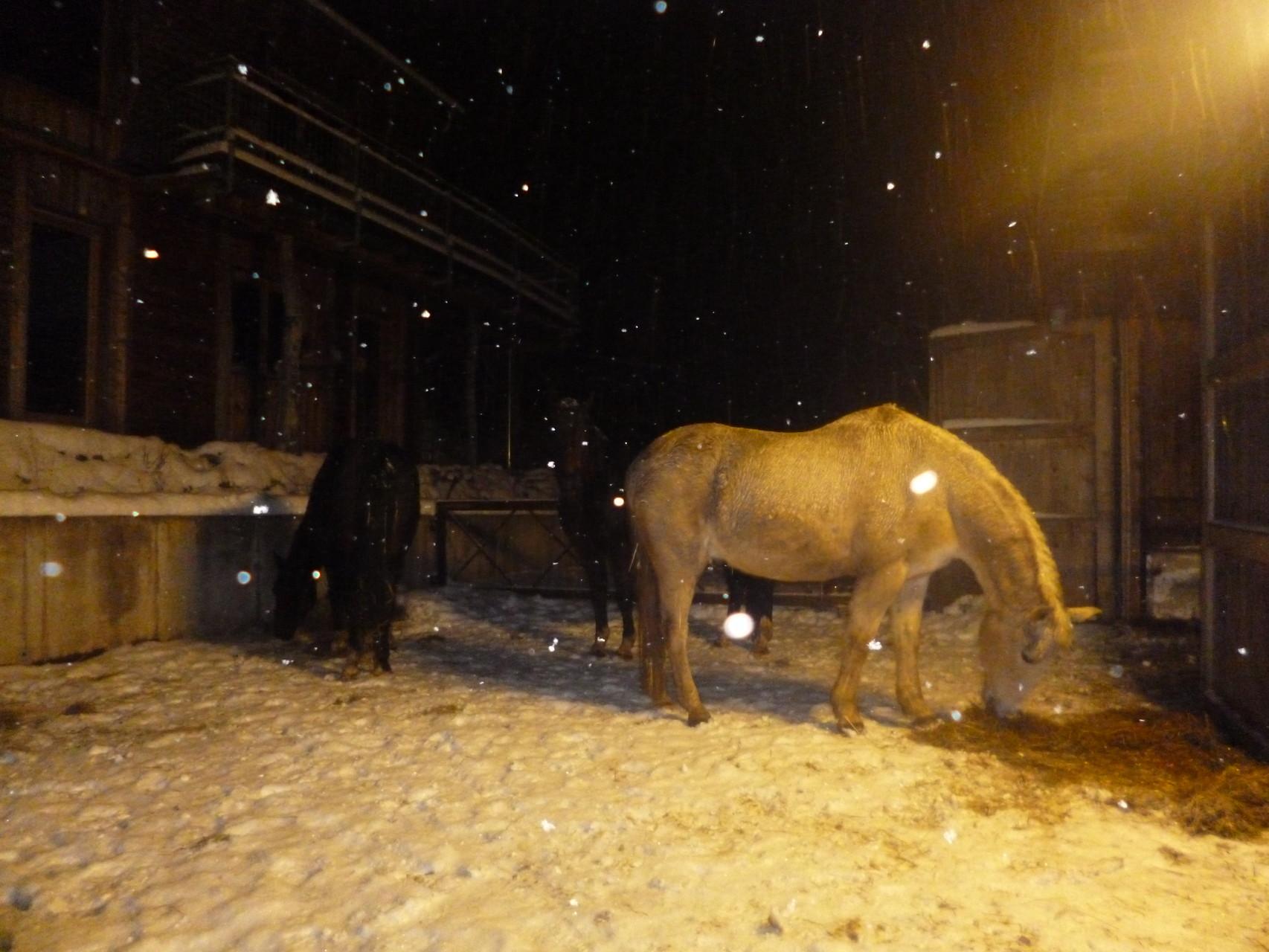 Bei unseren 4 Pferden schneit es auch