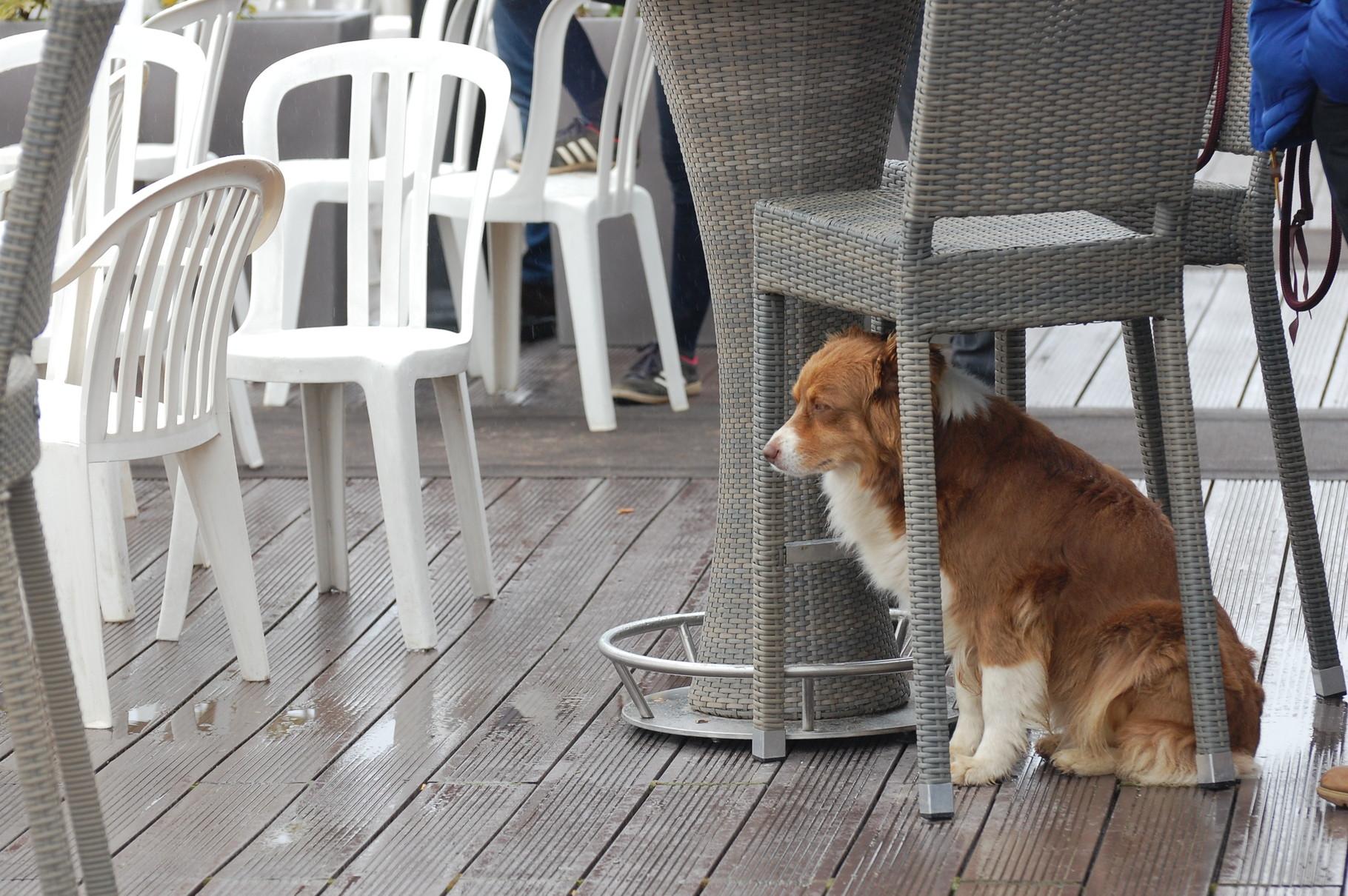 FLEURY n'aime pas la pluie !
