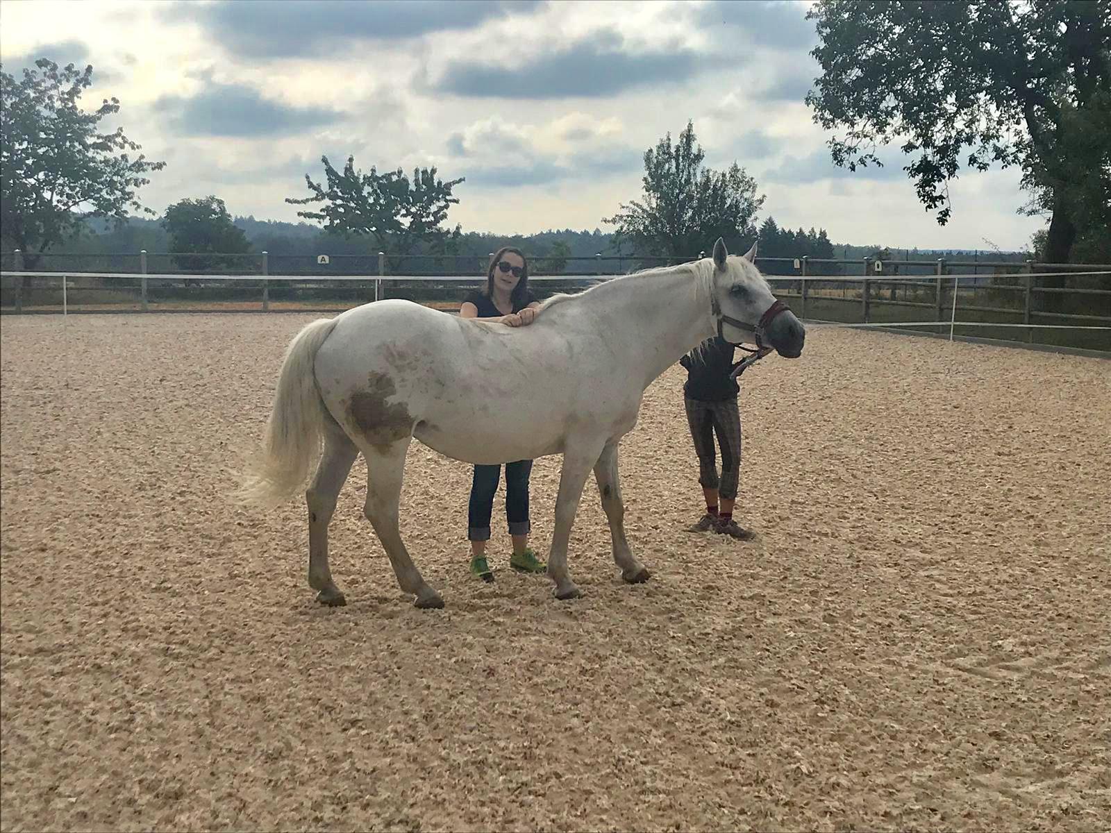 Marion überprüft das Pferd nach Blockaden