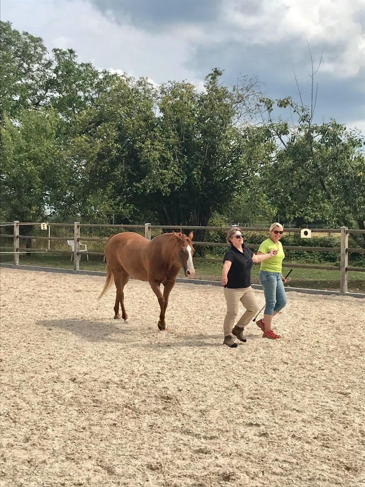 Coaching mit Claudia