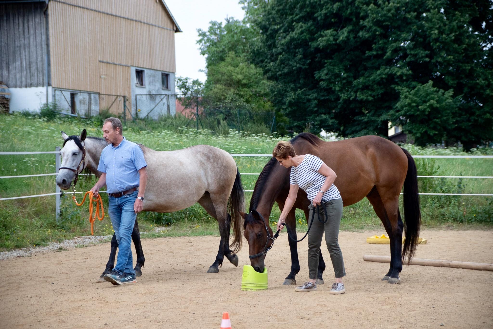 Teambildung mit Pferden