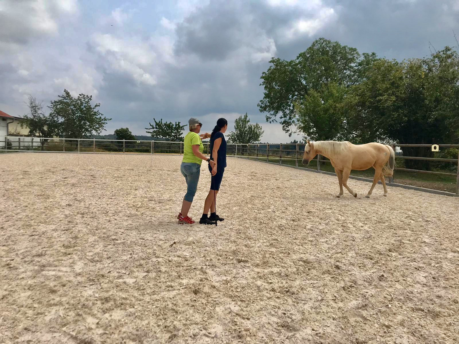 Kommunikation Pferd Mensch