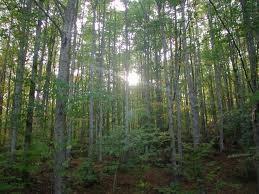 Il legno è uno dei materiali più green che si possono avere in una finestra. Le foreste e la biodiversità, elementi che danno origine al legno delle finestre, sono fondamentali per la sopravvivenza delle specie sulla terra. Tuttavia, sappiamo che il legn
