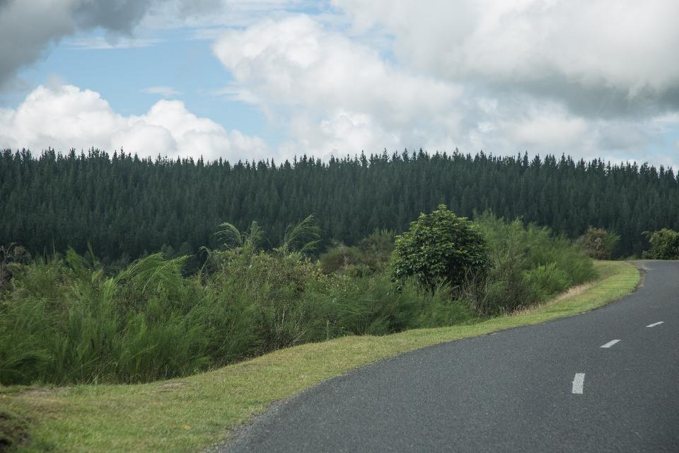 Rotorua abgelaufen, geht's weiter on the road, ein Stückchen nach Süden, wo es ein weiteres Geothermiegebiet gibt.