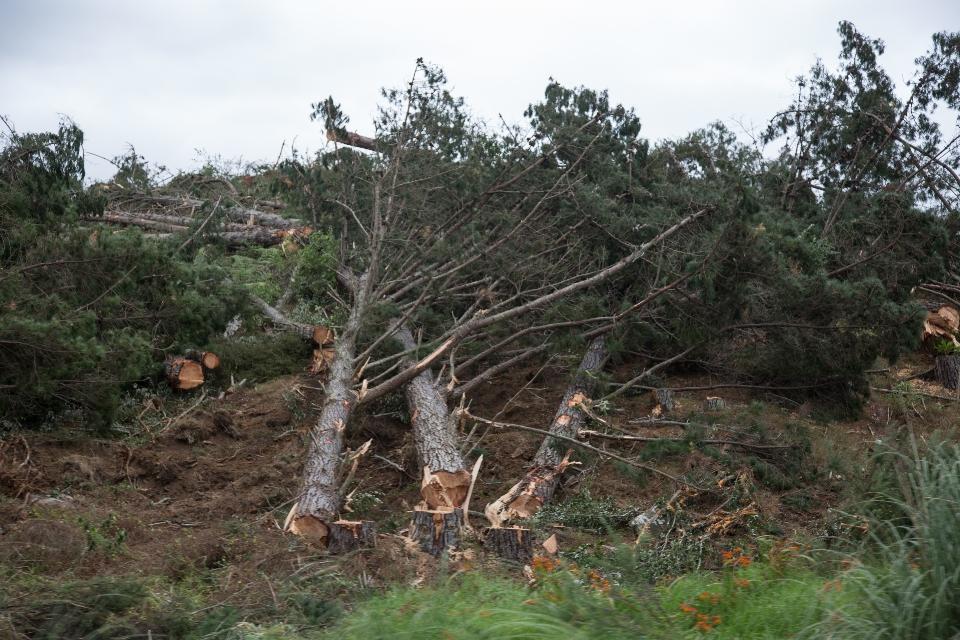 ...warum Neuseeland nicht mehr ein einziger Urwald ist, wie es einst einmal war.