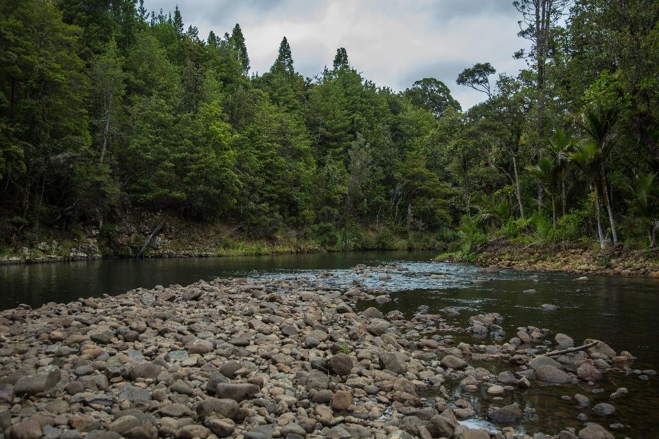 ... fließt mitten durch den Ur-Regenwald