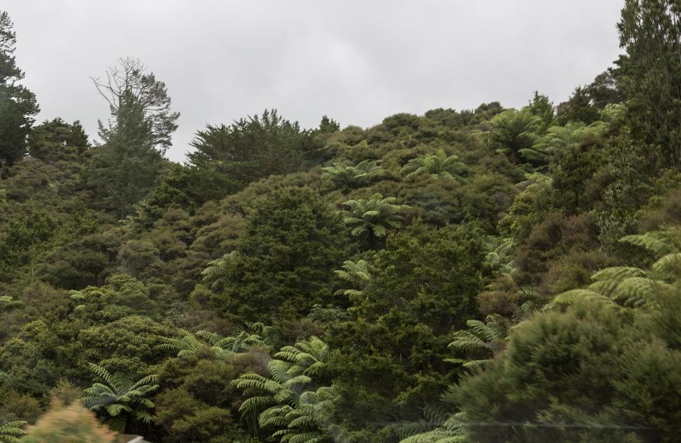 ...unter üppiger Vegetation.