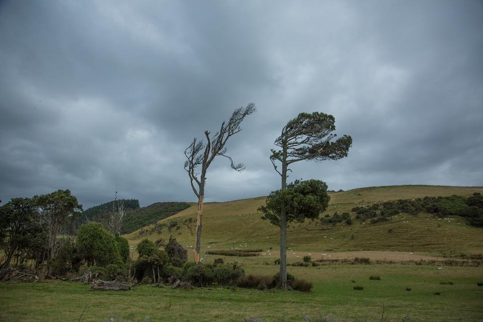 ... weiter durch die windzerklüftete Wildnis der Catlins.