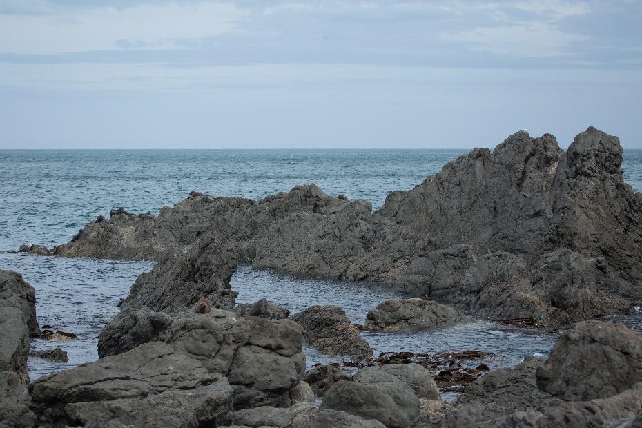 ... haben wir uns aufgemacht, die schroffe Küste am Cape Palliser zu erkunden. Wer und was uns da begegnete, braucht meine Worte nicht. Die sprechen für sich selbst. Seht selber ... 😉