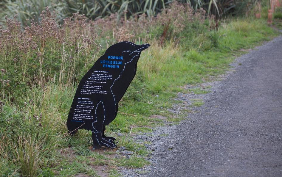 ... an der man zur passenden Tageszeit Pinguine beobachten kann, ...