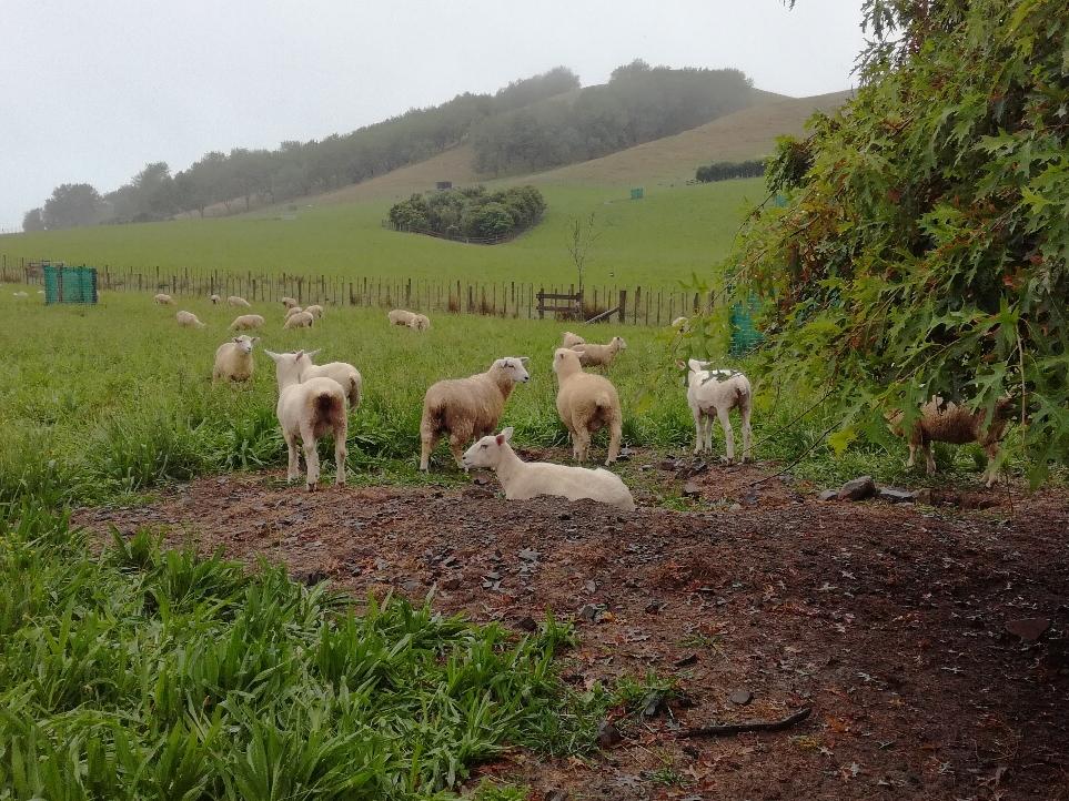 "TAG SECHS Am nächsten Tag hieß es dann ""Tschüss Schafe"" ..."