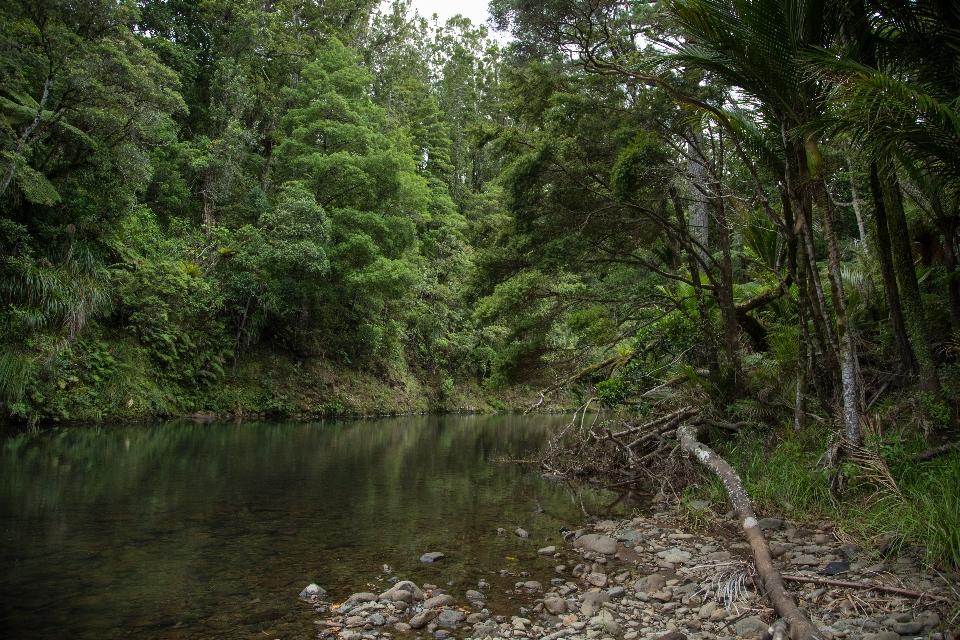 Whaipoua River