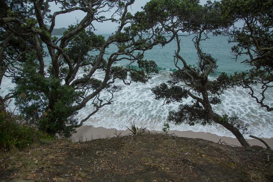 Auf auf zur Cathedral Cove , ein beschwerlicher Wanderweg von einer Stunde Bergauf und Bergab ...