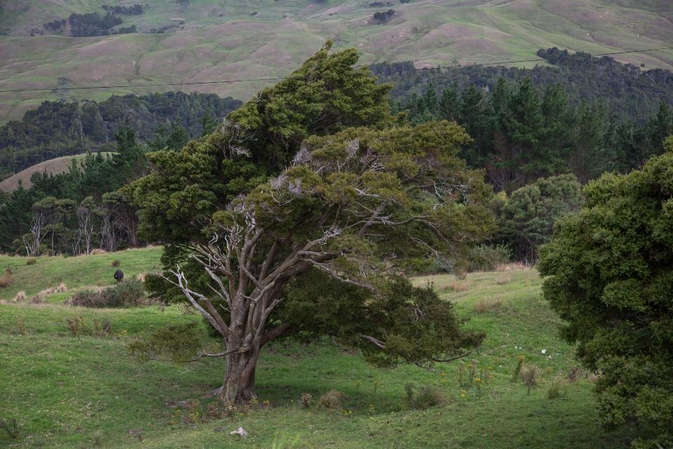 ... mit schrägen Bäumen ...