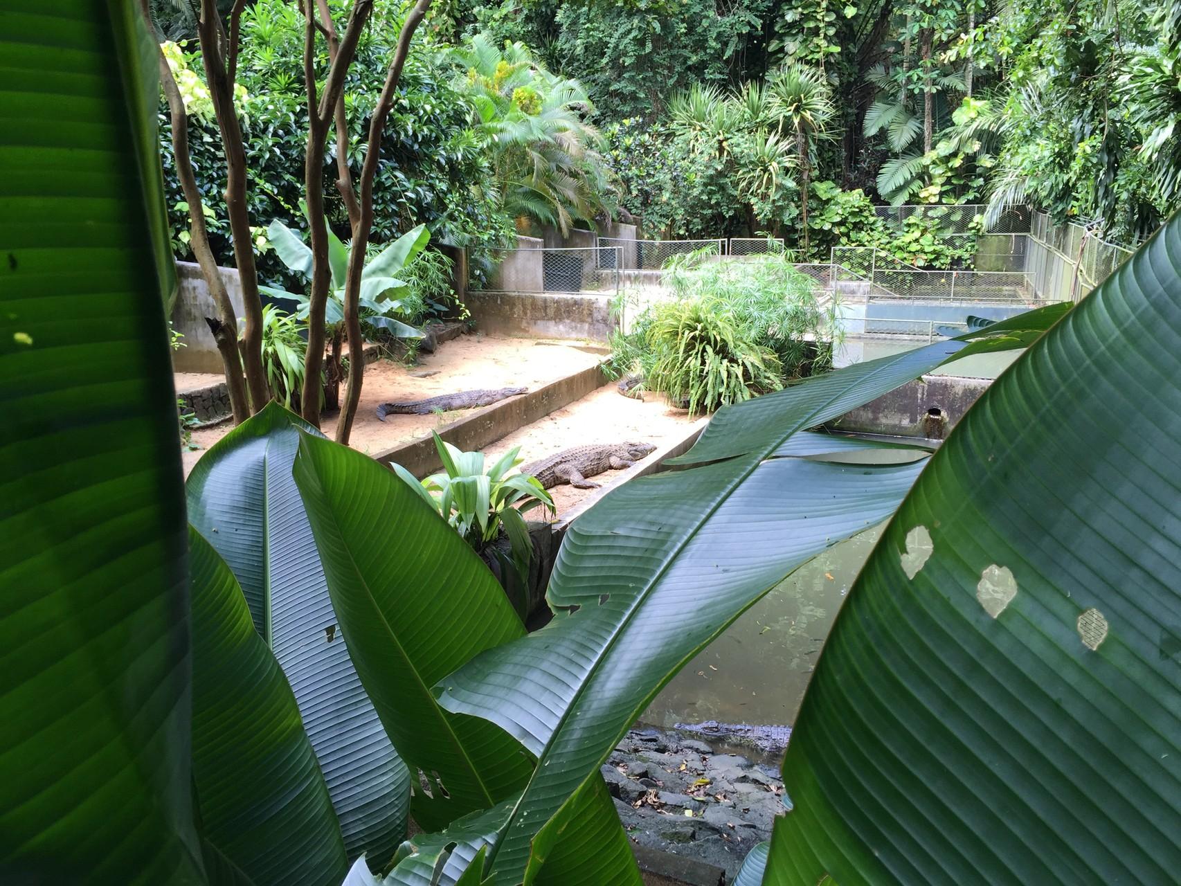 Crocodiles et Caïmans de la Vanille RESERVE à l'île Maurice