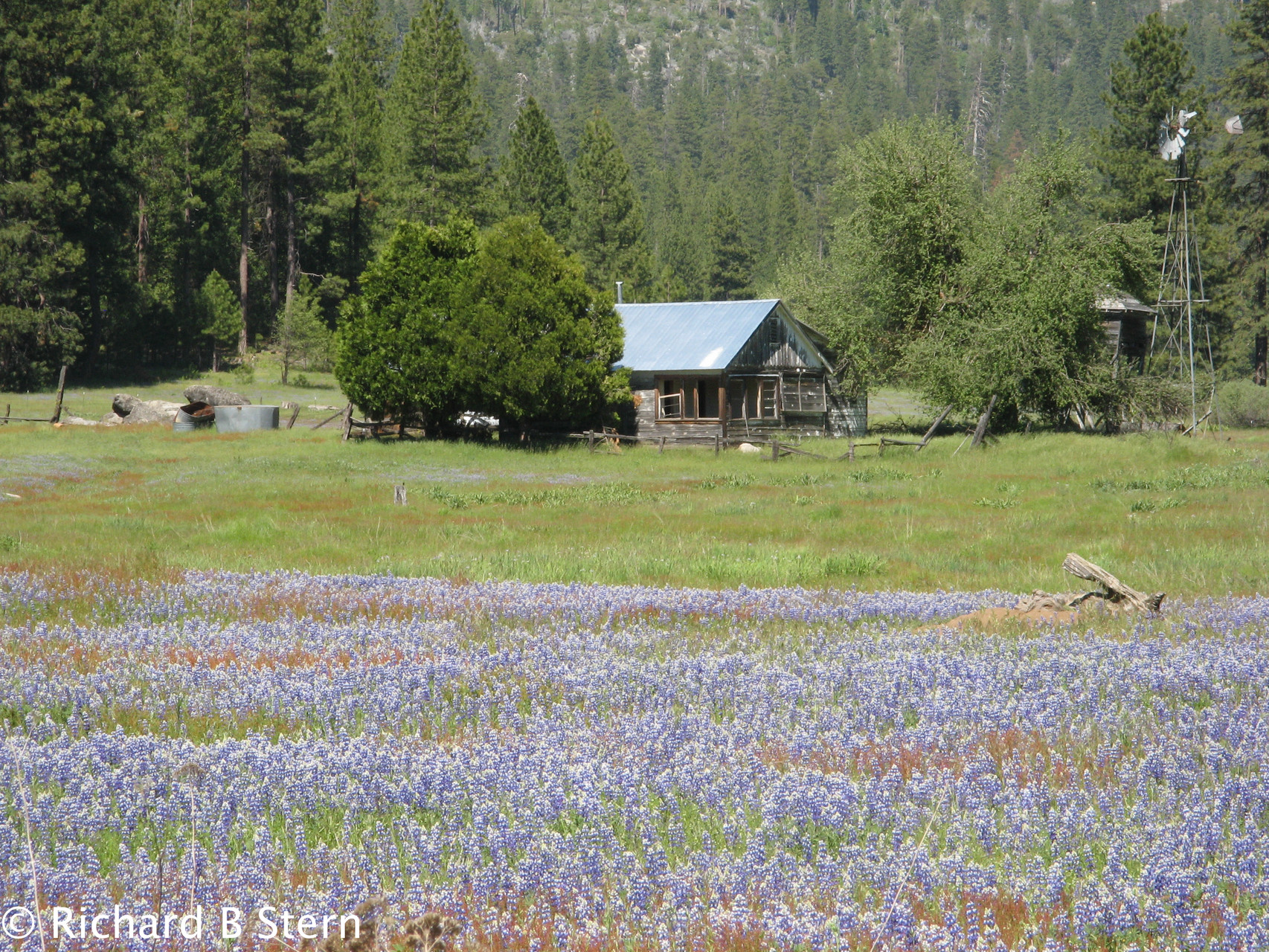 Kibbie Lake Backpack Trip-Yosemite National Park