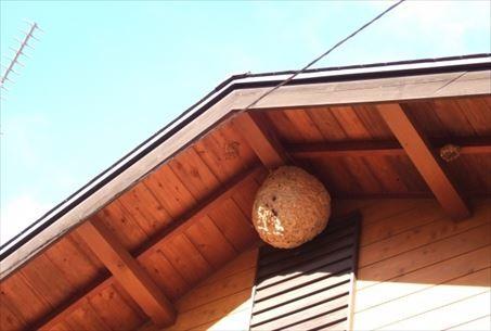 ハチの巣に注意したい場所