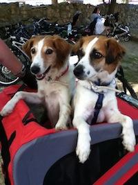Bonny und Amy im Fahrradanhänger
