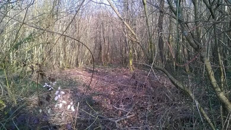 Emplacement dans les bois