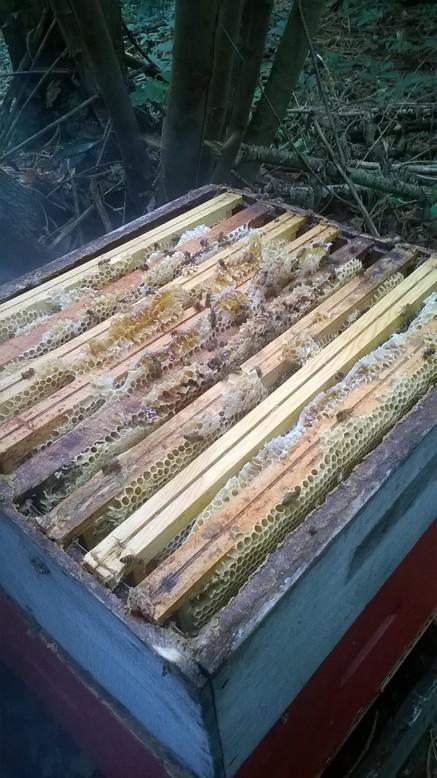 Hausse pleine de miel
