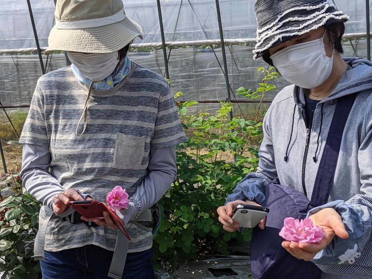 バラの摘み取り&蒸留&クラフト体験レポート