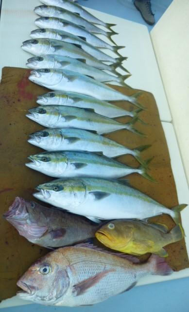 11月5日 今日の釣果天候悪く 午前中の釣果
