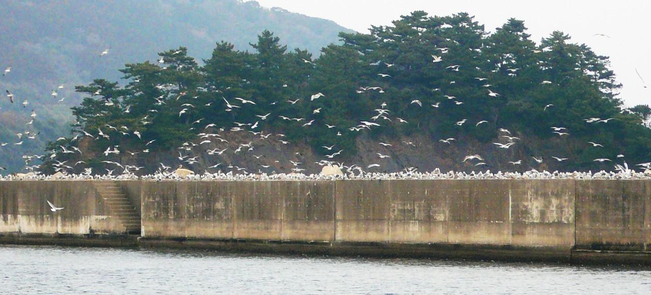 1月20日 鳥の休息 場所探し