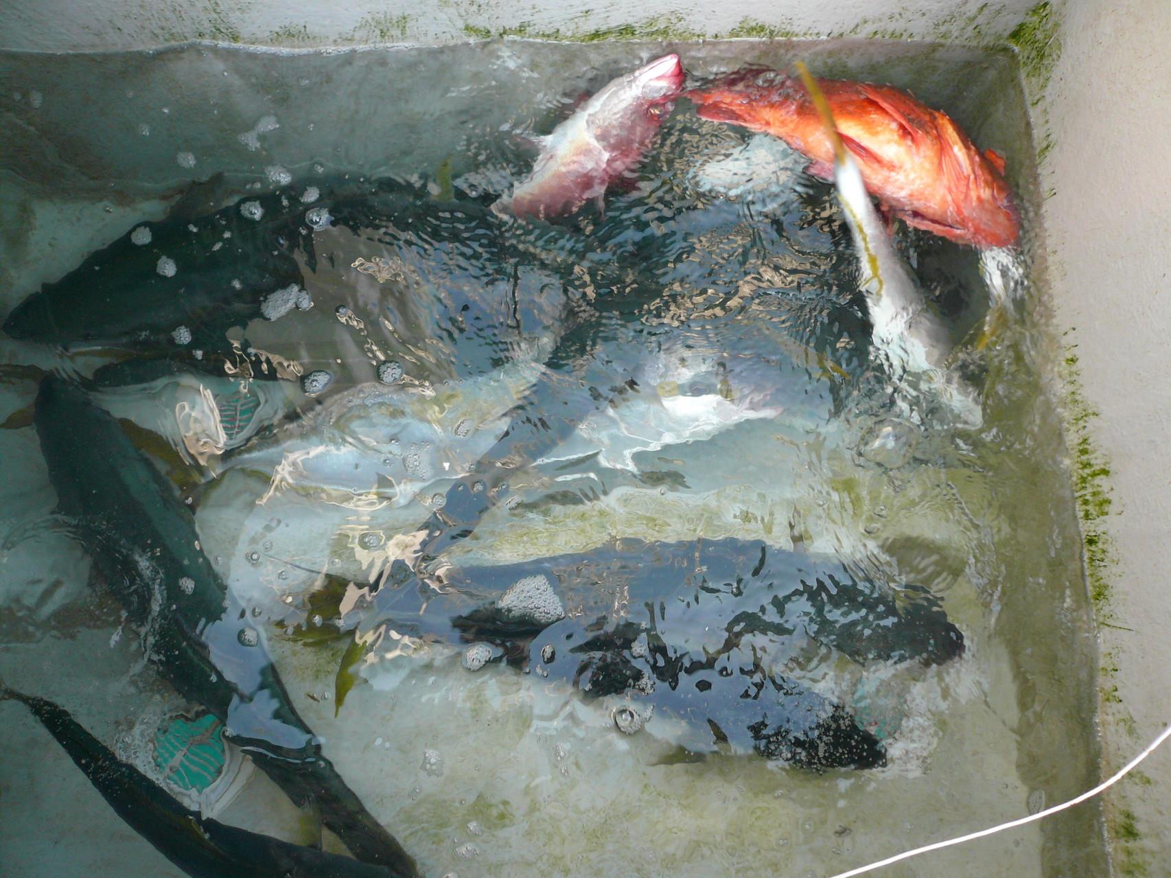4月8日三界のポイント・タイ釣り場(バケモン)のポイント・今日の釣果