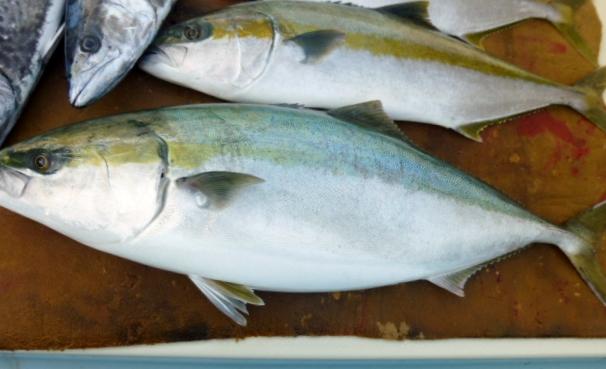 1月4日初釣り 10kg大ぶりゲット