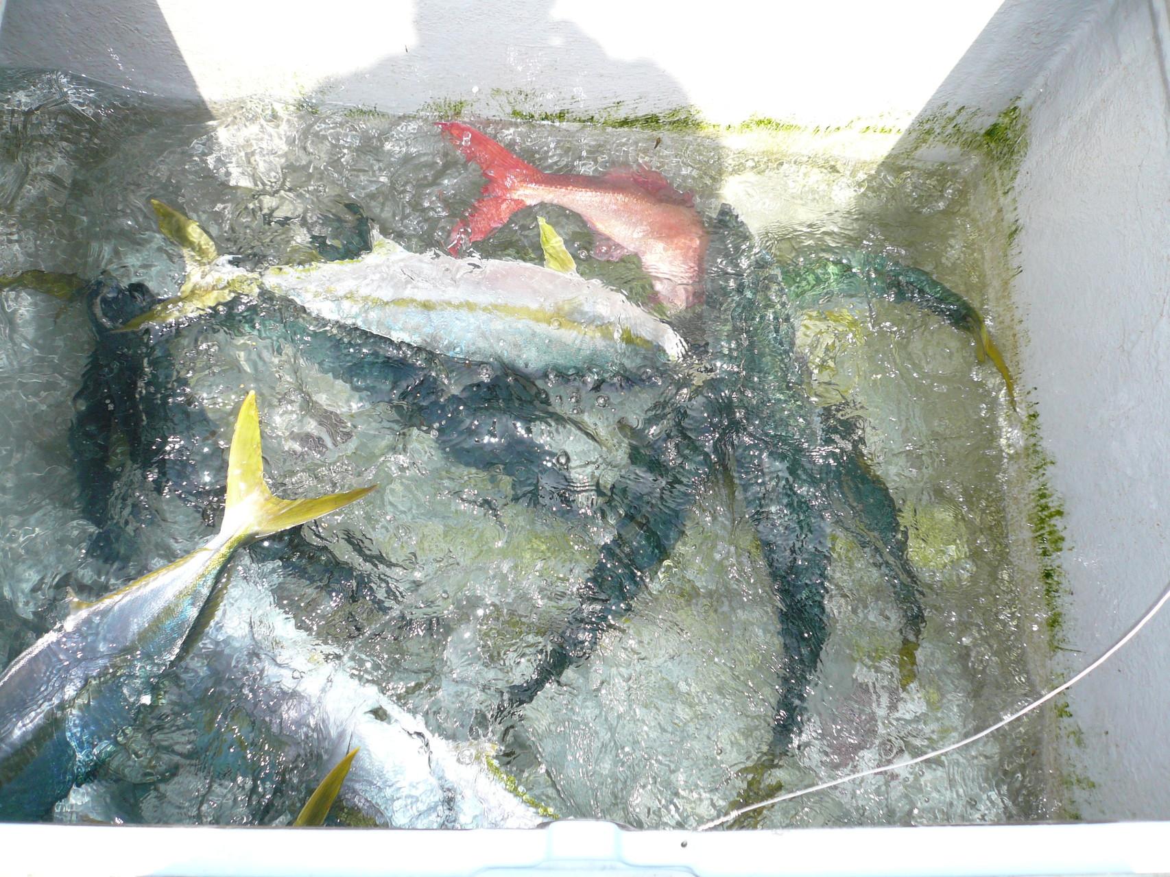 4月21日 今日の釣果小ぶり×3匹ワラサ×2匹 ヒラマサ5.8kg・3k以上3匹他