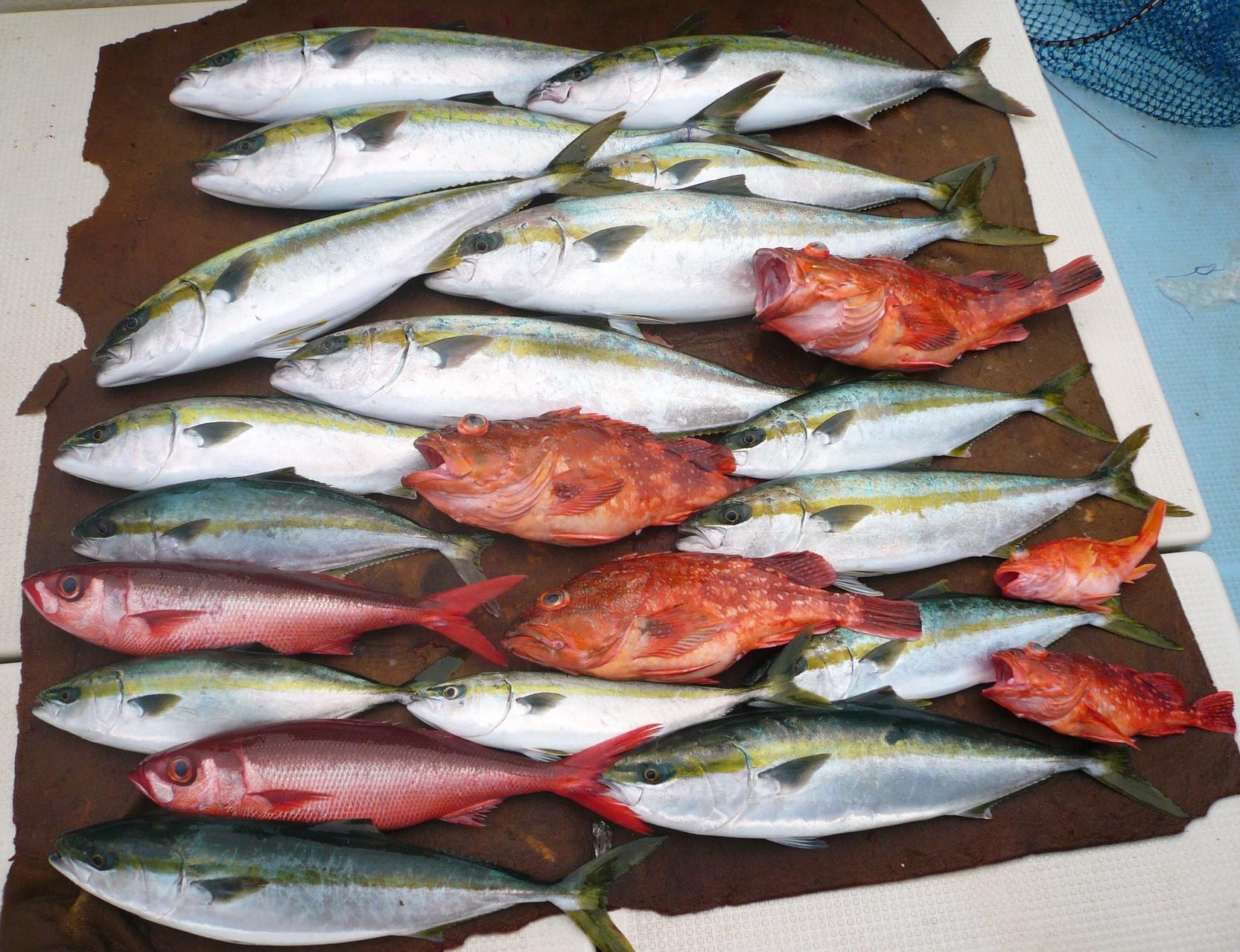 いろんな魚種の釣果です