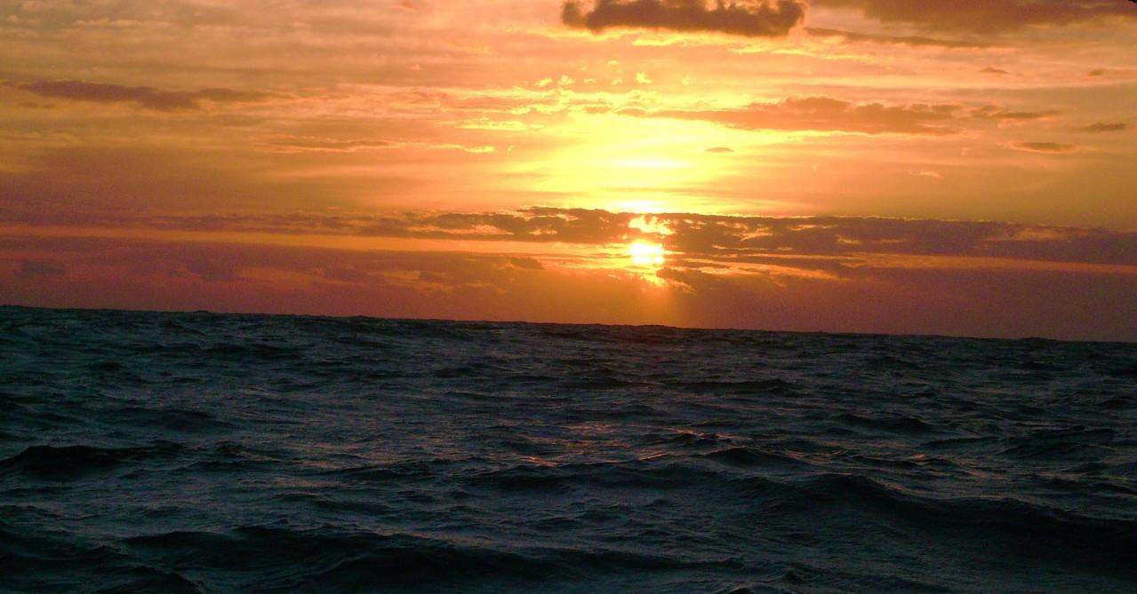 品木の海から望む朝日