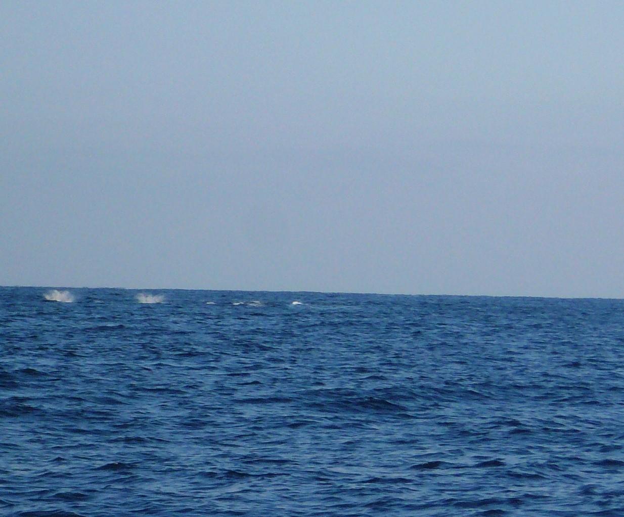 3月12日 最悪です イルカの大群 魚の群れが散らばり釣れなくなり大変です