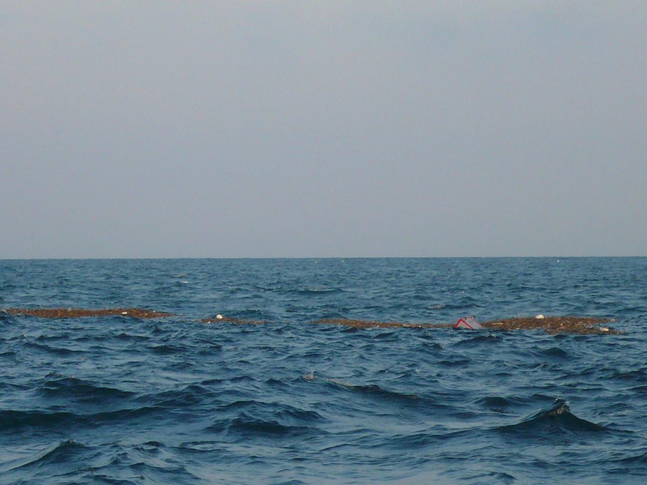 韓国に台風16号上陸 その結果 喜ぶのはシイラだけ ほかの魚もかな