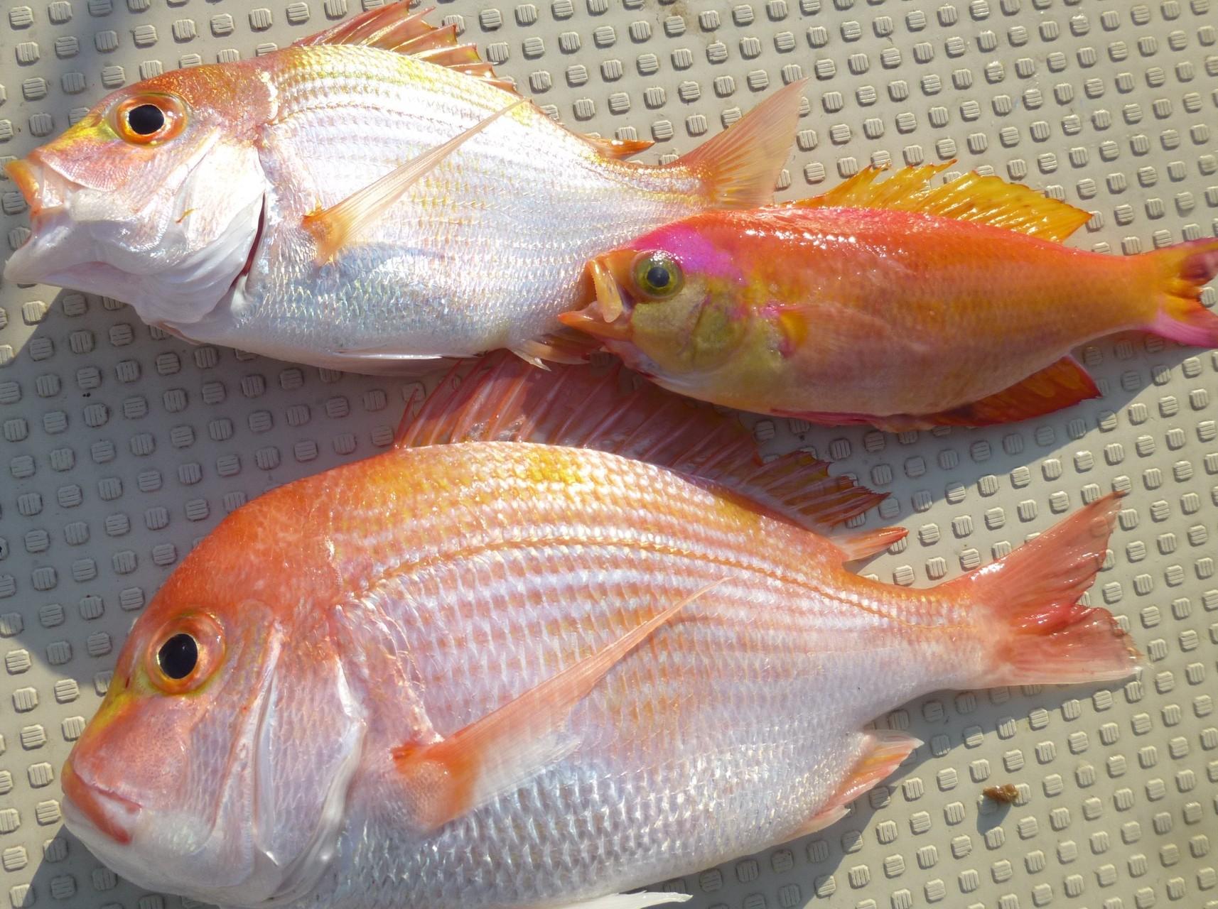 4月22日東側漁礁レンコ鯛
