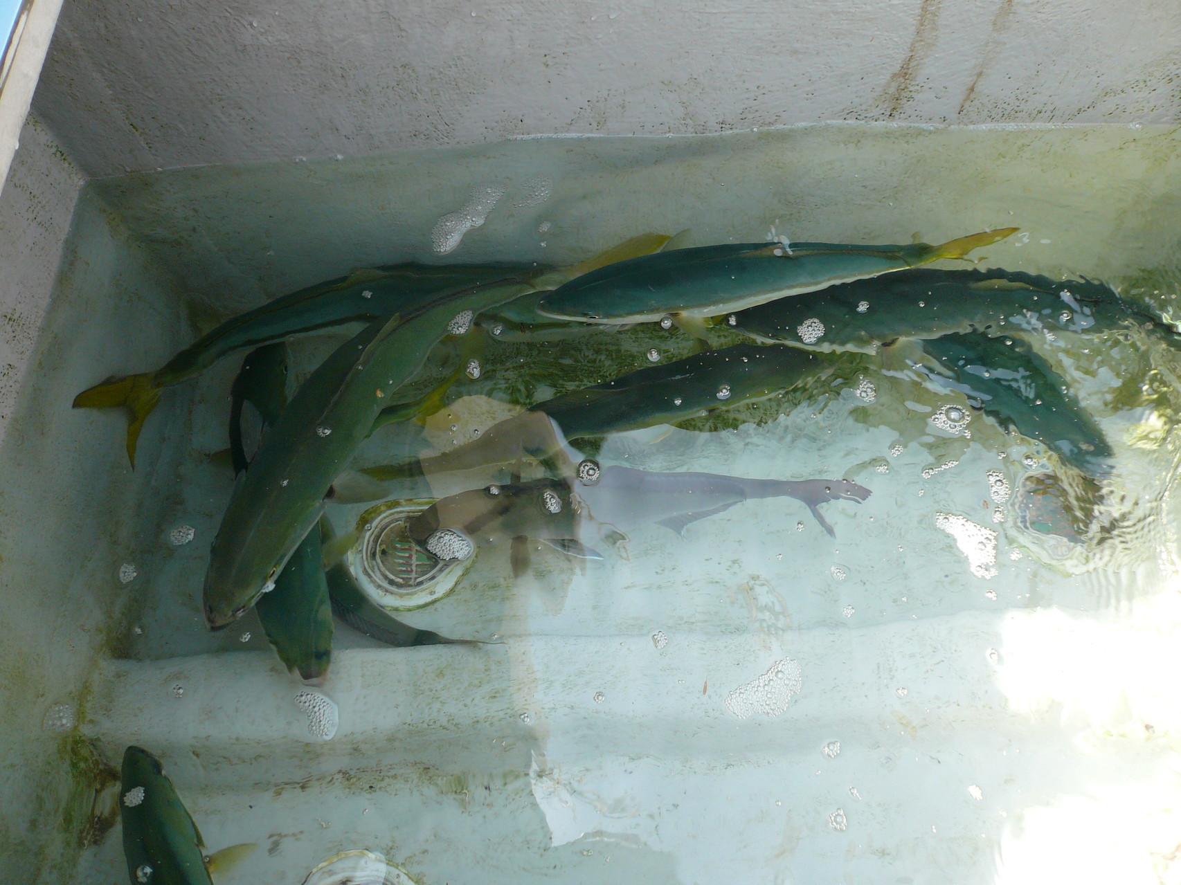 5月31日今日の釣果 東側(オロン滝中曽根)は魚の反応がない 如何してかな・巻き網船かな?
