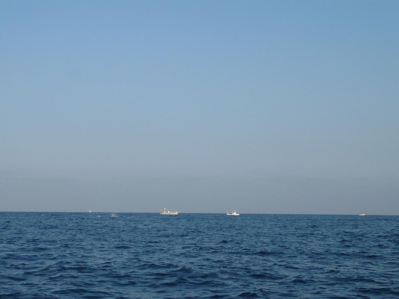 3月12日 最悪です イルカの大群 サワラ・ブリ・ヒラマサ釣りの漁船の近くをイルカが通過します