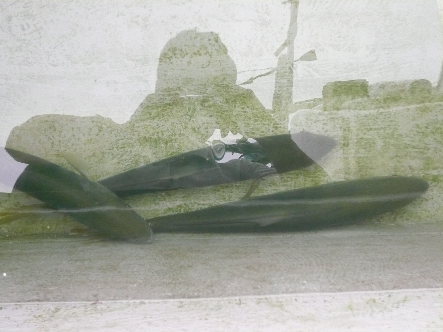 7月16日残り池間の中 ヒラゴ×3匹